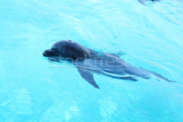 Cute dolphin swimming in the pool Stock photo © PawelSierakowski