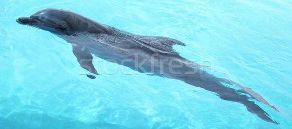 Piękna Delfin pływanie Fotografia cute Zdjęcia stock © PawelSierakowski