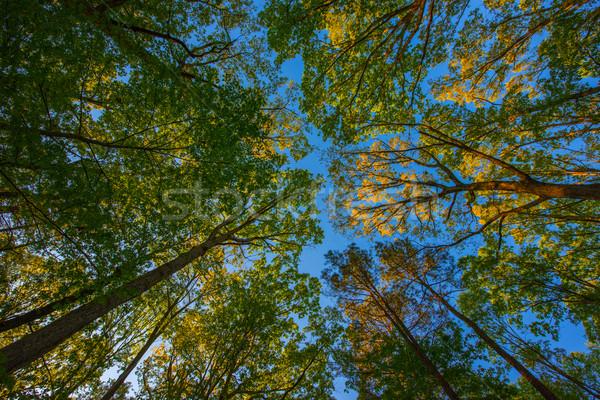 ツリー 木 フォーム 美しい 空 春 ストックフォト © pazham