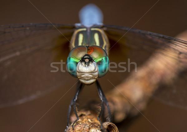 Sárkány légy szemek zárt természet kert Stock fotó © pazham