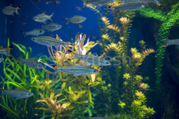Halfajok akvárium csoport úszik iskola tenger Stock fotó © pazham