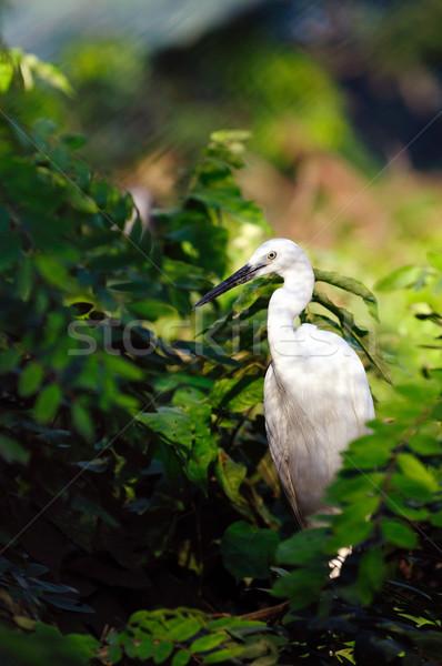 Fák madár anya trópusi fehér állat Stock fotó © pazham