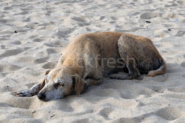 Terkedilmiş yaralı köpek plaj gözler doğa Stok fotoğraf © pazham