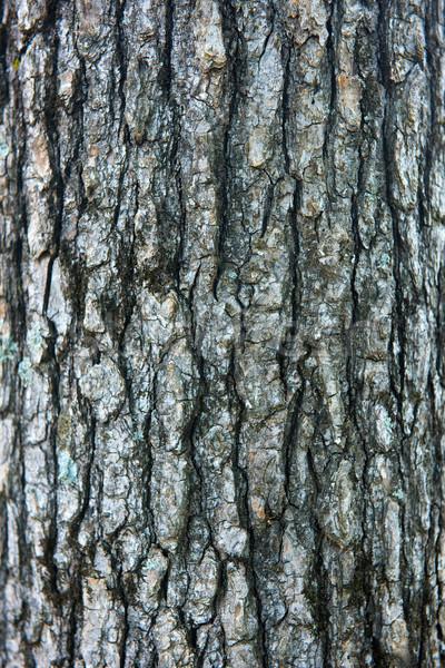 Fa ugatás közelkép lövés fa erdő Stock fotó © pazham