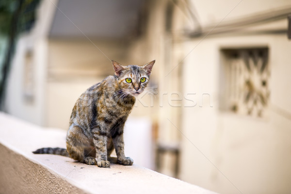 Cat on the Wall Stock photo © pazham