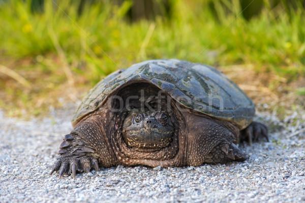 Teknős zárt napos idő természet háttér fej Stock fotó © pazham