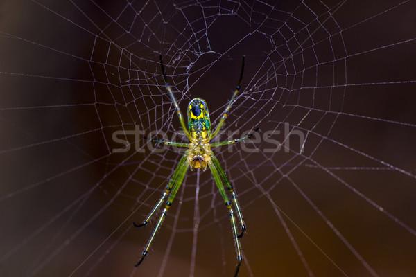 Stock fotó: Pók · nyár · háló · éjszaka · fekete · fehér