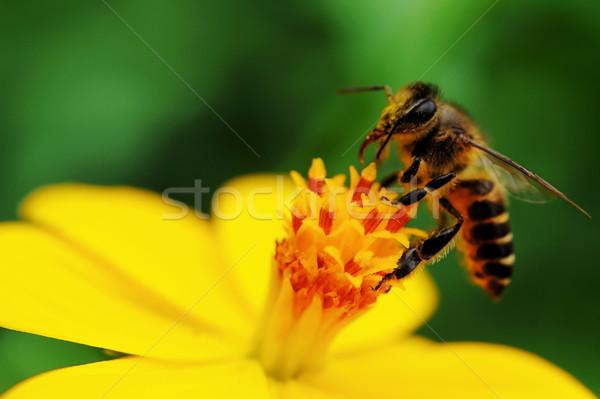 Pollination Stock photo © pazham