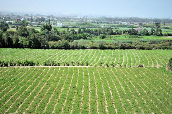 полях кукурузы Лима Перу продовольствие Сток-фото © pazham
