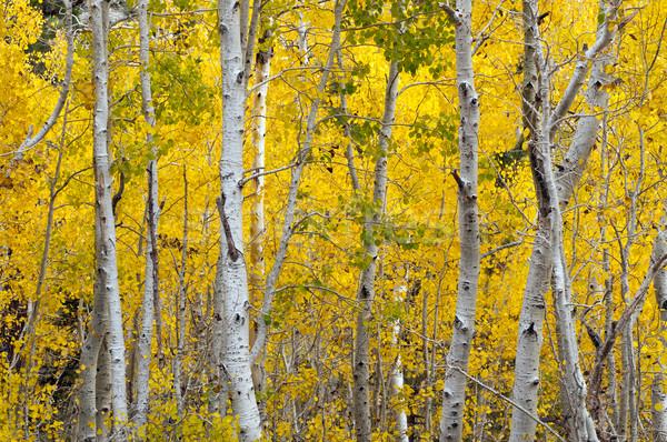 Autumn Foliage Stock photo © pazham