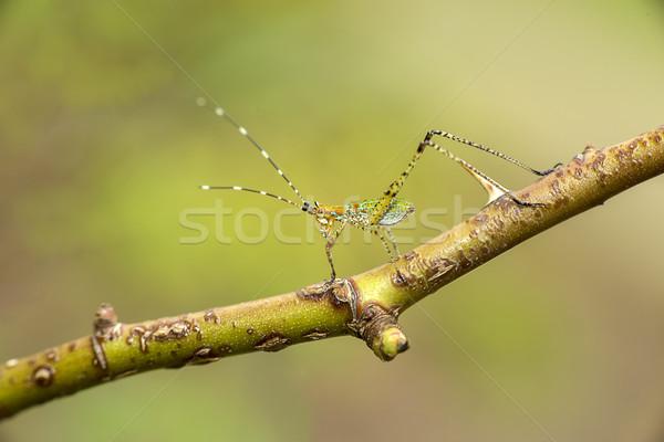 Immature feuille vert belle nouvelle Bush Photo stock © pazham