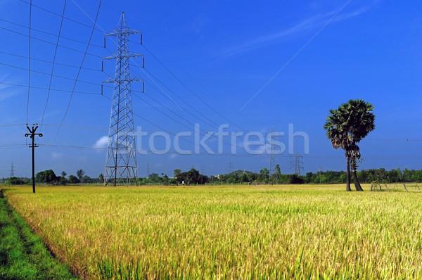 Agriculture luxuriante or domaine prêt récolte Photo stock © pazham