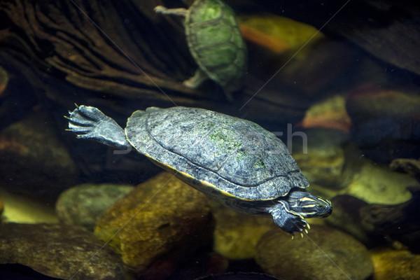海 カメ 水族館 スイミング 魚 自然 ストックフォト © pazham