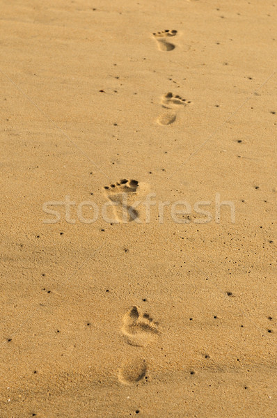 Footsteps Stock photo © pazham