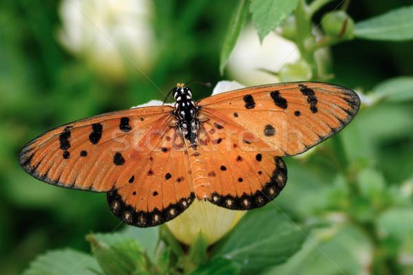 コースター 美しい 蝶 花 春 自然 ストックフォト © pazham