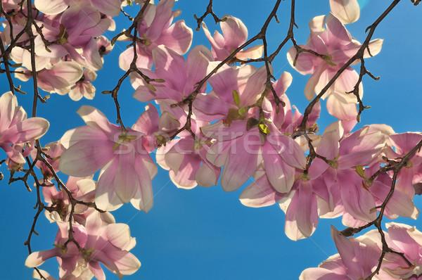 花 明るい 青空 花 背景 ストックフォト © pazham