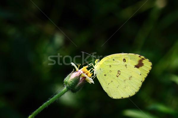 Yellow Stock photo © pazham