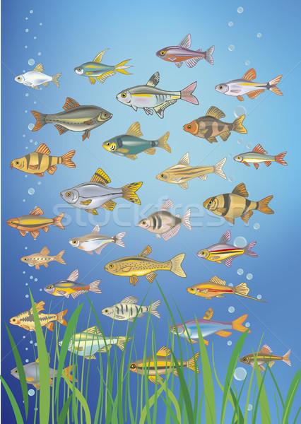 Stok fotoğraf: Su · siluet · balık · deniz · okyanus · imzalamak