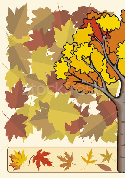 Renk sonbahar ağaç ahşap orman dizayn Stok fotoğraf © pballphoto