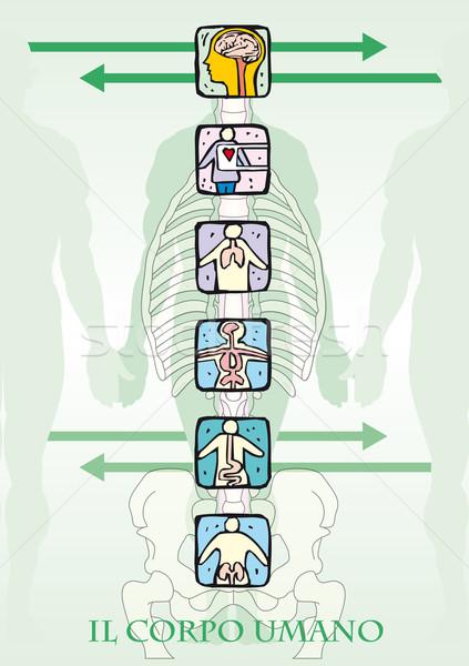 the human body Stock photo © pballphoto