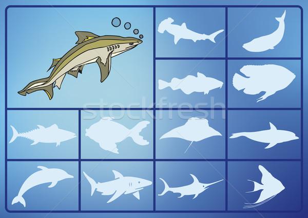 Su siluet balık deniz imzalamak hayvanlar Stok fotoğraf © pballphoto