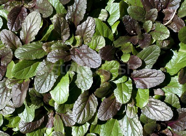 Yaprak doku soyut basit kırmızı yeşil yaprakları Stok fotoğraf © pdimages