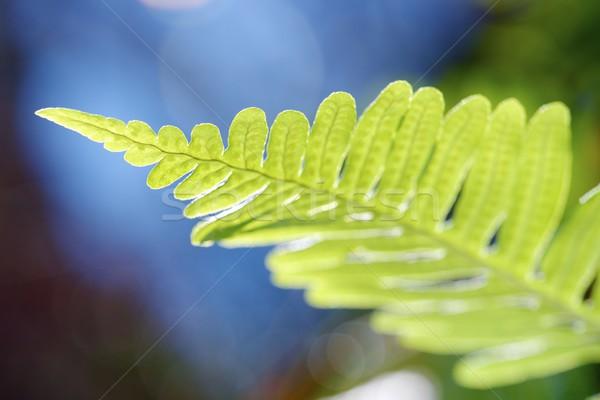 Varen park bos blad tuin Stockfoto © pedrosala