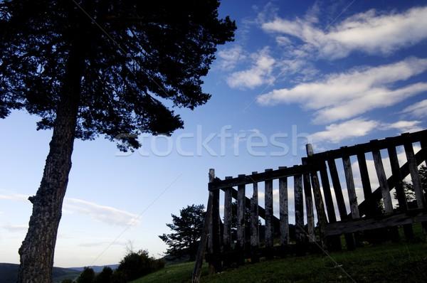 tree and fence Stock photo © pedrosala