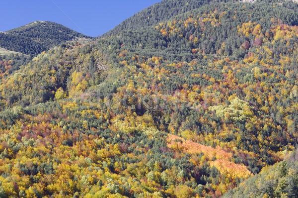 Najaar bergen Spanje bos landschap bomen Stockfoto © pedrosala