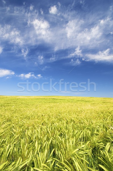 Stock photo: colorful field