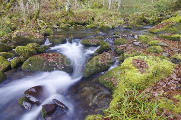 Dere ipeksi dere orman vadi yaprak Stok fotoğraf © pedrosala