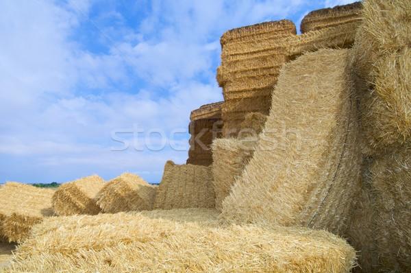 Szalmaszál kilátás csoport farm mező búza Stock fotó © pedrosala