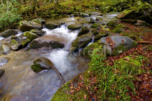 Patak selymes folyam erdő völgy természet Stock fotó © pedrosala