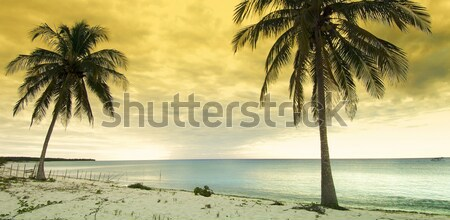 tropical sunset Stock photo © pedrosala