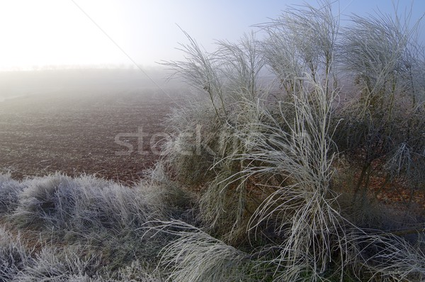 Photo stock: Froid · glaciale · matin · ciel · arbre · forêt