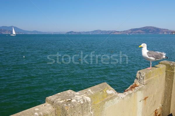 Sirályok San Francisco Egyesült Államok utazás csónak lábak Stock fotó © pedrosala