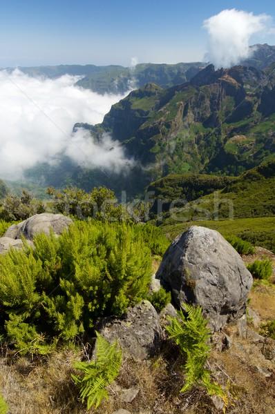 Madeira tepeler sis ada gökyüzü ağaç Stok fotoğraf © pedrosala