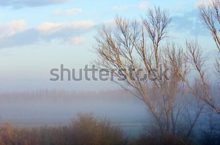 Cold dawn Stock photo © pedrosala