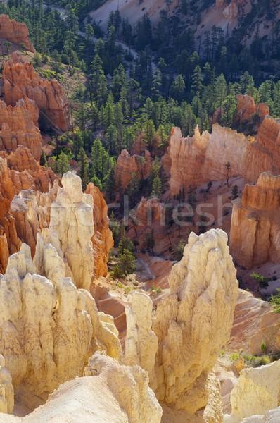 каньон хвоя парка Юта США горные Сток-фото © pedrosala
