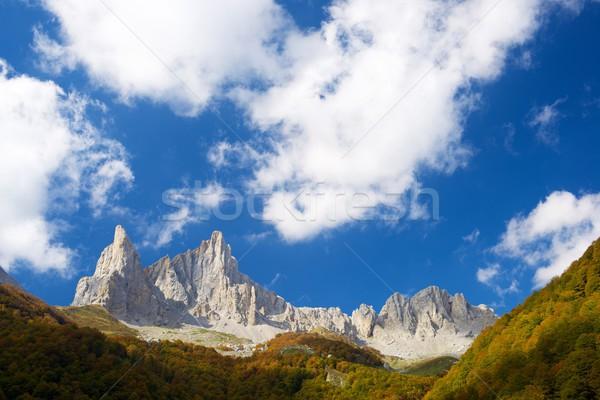 Helyes völgy égbolt fa erdő természet Stock fotó © pedrosala