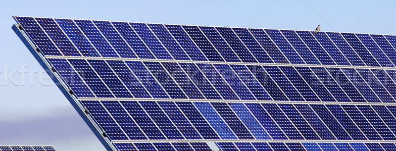 Photovoltaïque panneau oiseau détail électricité production Photo stock © pedrosala