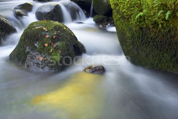 Patak selymes folyam erdő völgy fa Stock fotó © pedrosala