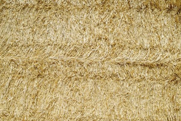 Paglia texture alimentare abstract campo farm Foto d'archivio © pedrosala