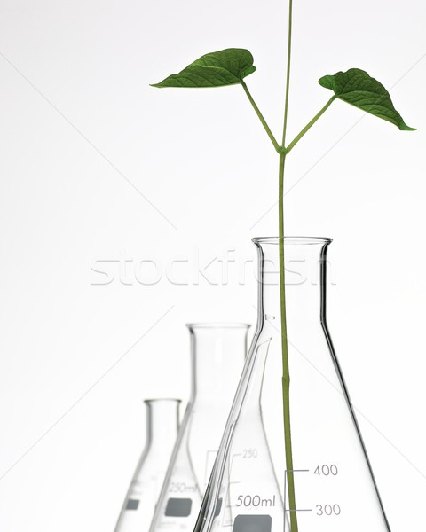 plant growing Stock photo © pedrosala