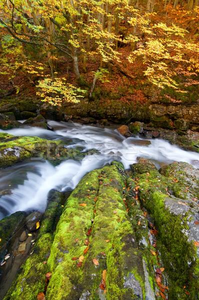 Selymes folyam erdő ősz park fa Stock fotó © pedrosala