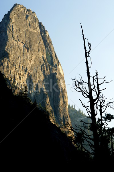Yosemite National Park Stock photo © pedrosala
