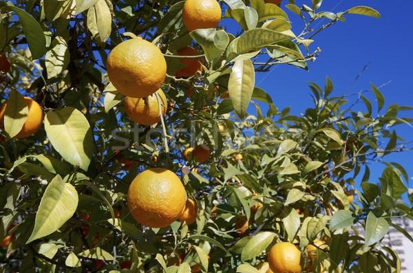Narancsfa város természet gyümölcs zöld ital Stock fotó © pedrosala