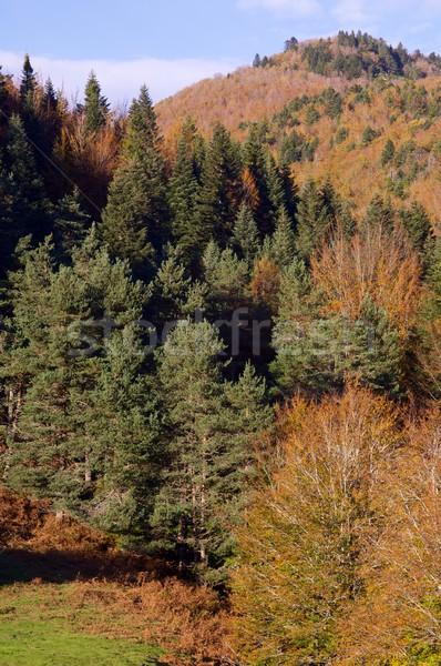 Najaar bos hemel wolken textuur natuur Stockfoto © pedrosala