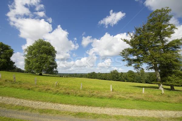 Normandia zöld legelő fák Franciaország fa Stock fotó © pedrosala