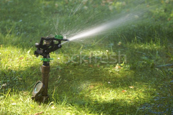 lawn sprinkler Stock photo © pedrosala